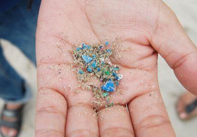 Chi cerca la microplastica, la trova!